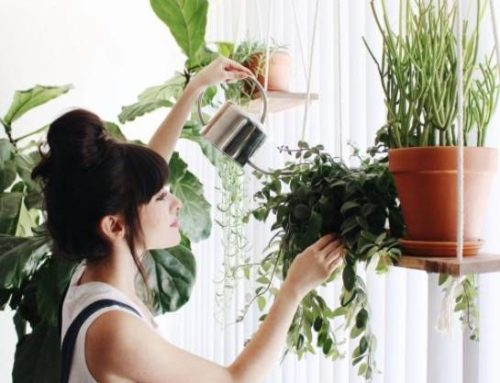 6 Best low-maintenance houseplants that anyone can grow